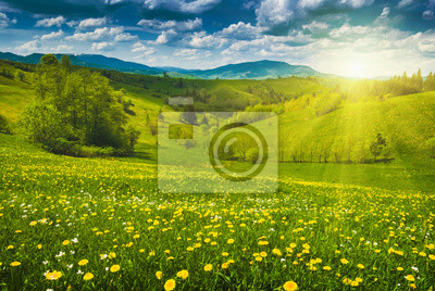 Sticker Yellow flowers in a spring meadow