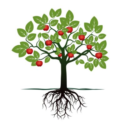 Sticker Young Tree with Green Leafs, Roots and Red Apples. Vector Illustration